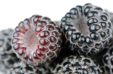 A close-up shot of fresh organic black raspberries (Rubus occidentalis) on a white background