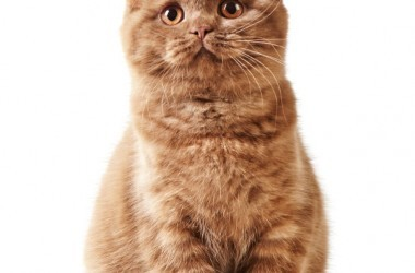 Cute orange tabby cat isolated on a white background