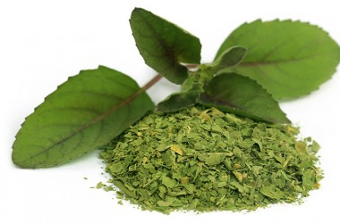 Medicinal holy basil or tulsi leaves over white background