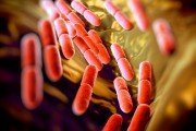 Good gut bugs like healthy bacteria Lactobacillus bulgaricus help us stay healthy