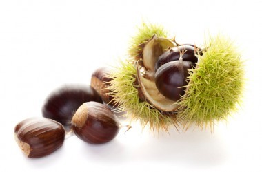 Sweet chestnuts in spiny green husk