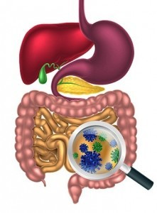 Bacteria superbugs in the digestive system