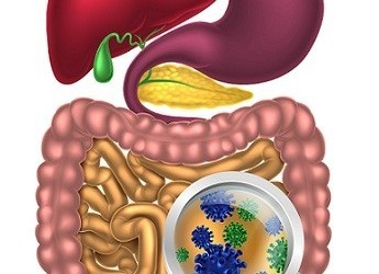 Illustration of probiotic bacteria gut flora or your microbiome