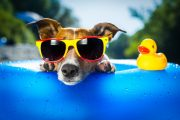 Dog in sunglasses practicing sun safety