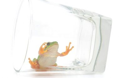 Frog in drinking glass represents atrazine in tap water