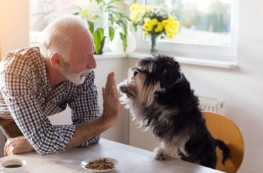 Senior man with his dog to illustrate health benefits of pets