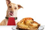 Dog at table hungry for Thanksgiving turkey