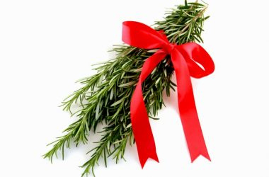 Rosemary in holiday ribbon to illustrate its memory benefits